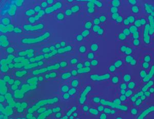 Inżynieria genetyczna i transformacja